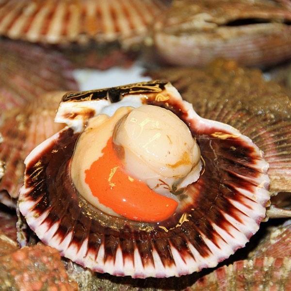 St-Jacques du Canada - demi-coquille avec corail 20/30 1kg